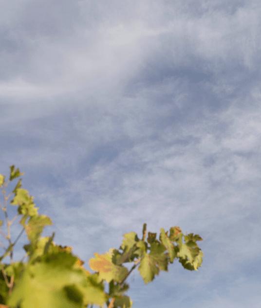 Mejores bodegas de Vino de Toledo