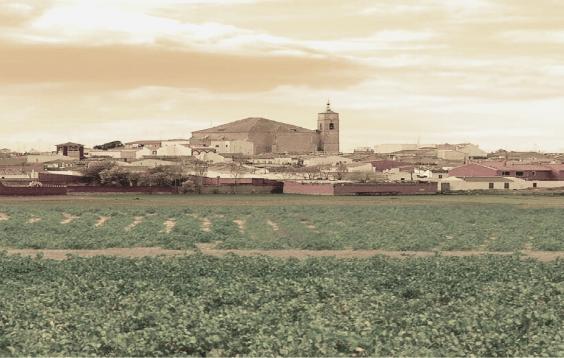 viñedos de Toledo